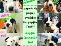 Alachua County Animal Services is FULL of puppies!!!