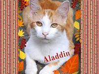 Aladdin's story ** Contact info: email
