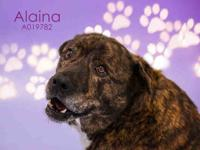 ALAINA's story Hello! I am new to the shelter! My name