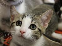 Alaska's story The adoption fee is $85.00 with an