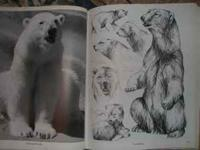 PRICE REDUCED! Two wonderful Alaska Wildlife books!