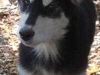 I have 3 purebred Alaskan Malamute Females 2 black and