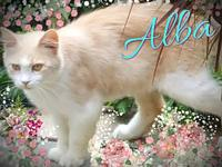 Alba's story ** Contact info: email