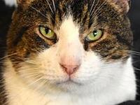 Albacore's story Albacore is a very sweet, easy going,