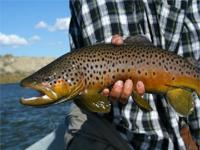 North Platte Fly Fishing Ranch - Alcova, Natrona