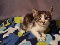 Alder's story Sweet and Loving... Meet Alder! He is an