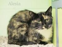 Alesia's story Alesia is a petite girl who is learning