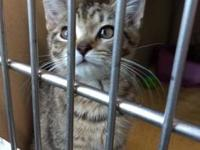 Aleu's story Five kittens were found in the county and