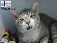 ALEXANDER's story This big boy is available for