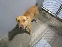 ALEXIS's story Female, found on Alexander Dr in Semmes.