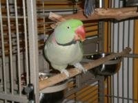 HE IS A GREAT BIRD I MUST SELL HIM DO TO HEALTH, HE IS