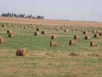 Alfalfa/Grass hay for sale. $37.50/ bale. Located by