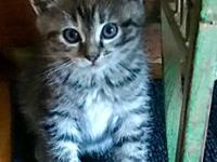 Alfie's story A little fuzz ball who is sweet & purring