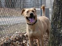 What a very handsome boy!  Alfonso is also friendly and