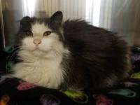 Alfonzo's story Alfonzo is a male neutered approx. 4