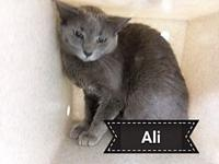 Ali's story Say Hi to Ali. He/She is a recent trapped
