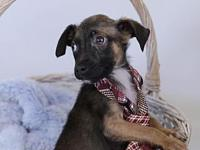 Ali's story Ali is fostered in Anniston, AL. We are a