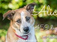 Alice's story Alice is available for foster or