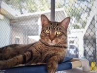 Alice's story Alice is a cat that you will like right