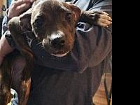 Alice's story STAR is a foster-based rescue. All our