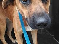 My story My name is Alice. I'm a 45 lb Terrier mix