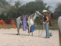 "AQHA Zippo Pat Bars 2003 mare. 14.2 hands ""Sparkles"" is"