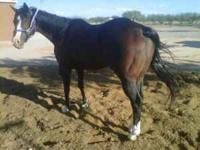 I sell this horse which is a all around for that can be