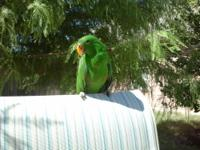 ALL DIFERENT PARROTS SMALL AND BIG, RAISED IN OUR HOME