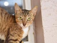 Allegra's story - Allegra is a sweet little stunner