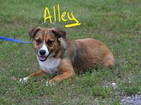 Alley's story Alley is a sweet playful puppy looking