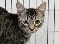 Allie's story Asher and Allie were stray kittens in a