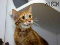 My story Allison is available for adoption at the