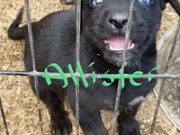 Allister(small pup blue eyes)'s story Our pets are