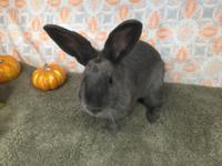 Ally is very sweet and loves attention!  For more