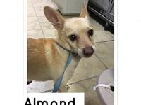Almond's story Location-K14 Visit this organization's