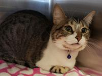 """Alora"" is a very pretty spayed and declawed female."