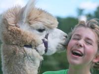 Get started in the Alpaca Industry with quality