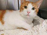 Alvin's story Alvin is a handsome 1.5 year old male