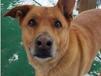Alvin's story Alvin 10 yr old German Shepherd mix Super