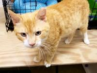 ALVIN is an active one year old boy who is super sweet