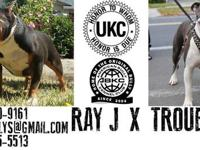 WE TOOK BAYBLOCKBULLYS EXTREAME POCKET RAY-J! TO OUR XL