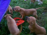 Cute pitbull puppies for sale. Make me an offer and we