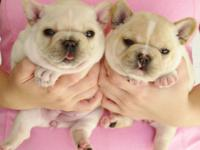 We have amazing frenchie babies available! please visit