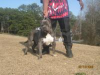 Atlanta's Finest Bigbody Kennels presents another