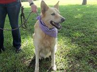 Amazing Dixie Girl's story **Dixie is currently being