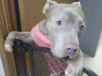 My story Amber comes to us as an unclaimed stray dog