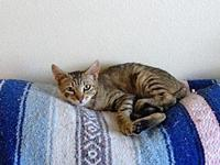 My story Amber first came to a Catty Shack foster as a