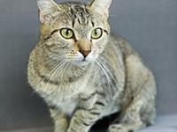 Amber's story Meow!  My name is Amber.  I am