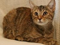 Amber's story **** Adoption Fee Reduced **** Her new