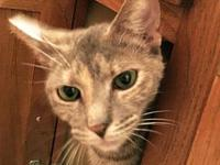 Amberle's story Amberle is a gorgeous tortie girl with